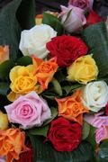 multicolored roses - stock photo