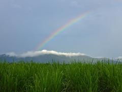 Rainbow in a field of grass - stock photo