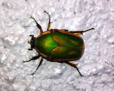 Colorful Beetle - stock photo