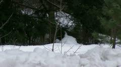 Deer in the Snow Stock Footage