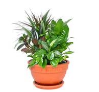 Houseplant arrangement - stock photo