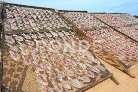 Stock photo of dried squid