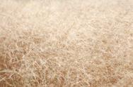 Stock Photo of dry grass