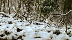 Snowy atmospheric scene 1 Stock Footage