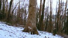 Snowy atmospheric scene 4 Stock Footage
