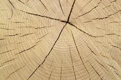 wood cut with annual rings - stock photo