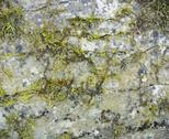 Stock Photo of stone surface with moss and lichen