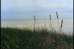 Winnipeg Beach, lake, reeds waving in breeze, Winnipeg, Canada - stock footage
