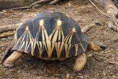Madagascar's turtle Stock Photos