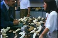 Archeological lab, bones, people look, Saskatoon, Saskatchewan Stock Footage