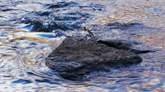 Stones in the water flow in the creek - stock footage