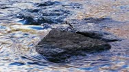 Stock Video Footage of Stones in the water flow in the creek