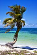 A palm in sian kaan lagoon mexico Stock Photos
