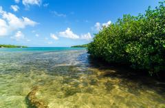 Caribbean Mangroves - stock photo