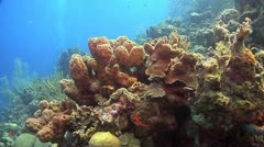 Coral reef Bonaire Caribbean, Coral scene 4 Stock Footage