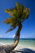 palm in the wind in the blue lagoon mexico - stock photo