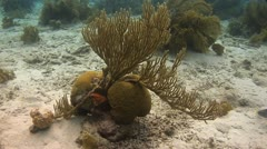 Coral reef Bonaire Caribbean, Coral scene 12 Stock Footage