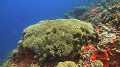 Coral reef Bonaire Caribbean, Coral scene 14 Stock Footage