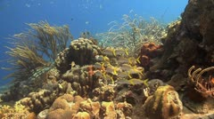 Coral reef Bonaire Caribbean, Tripod reef scene 5   G Stock Footage