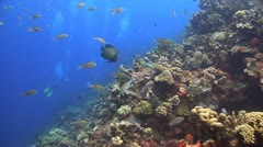 Coral reef Bonaire Caribbean, Coral scene 20 G    angel fish Stock Footage