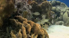 Tripod reef scene X, Coral reef Bonaire Caribbean Stock Footage