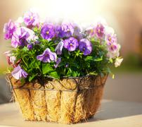 Flowers in pot Stock Photos