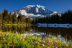 Mt.rainier Stock Photos