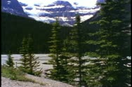 Jasper National Park, Alberta, Canada, mountain, pines, tilt up to glaciers Stock Footage