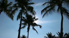 Palm trees silhouetted in the Caribbean Stock Footage