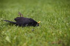 dead bird - stock photo