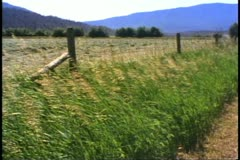 Kamloops, British Columbia, Canada, wheat fields, fence, waving wheat Stock Footage