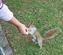 Feeding squirrel Stock Photos