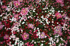 Flowerbed - stock photo