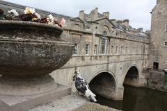 Pulteney Bridge, Bath Stock Photos