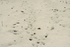 Lone runner in wintry wood, slow motion shot at 120fps Stock Footage