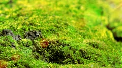 Moss In Spring Forest. Shot With Slider. Stock Footage