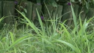 Grass Trimmer Slow Motion Stock Footage