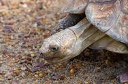 Stock Photo of giant tortoise