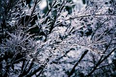 Deep Freeze on the Icy Trees Stock Photos
