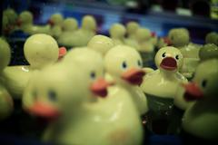 Lost Duckling - stock photo
