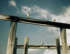 Seagulls on a Pier - stock photo