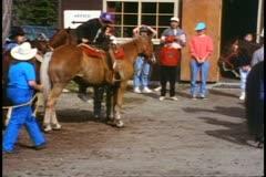 Jasper Park Lodge, Alberta, Canada, horseback riding, in paddock Stock Footage