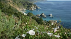 Flowers and Big Sur, California, coastline (rack focus) Stock Footage