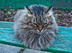 very fluffy cat - stock photo