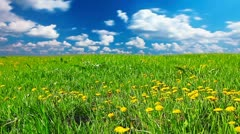 Glade of dandelions Stock Footage