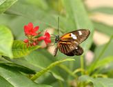 Stock Photo of tropical butterfly