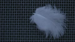 Feather - stock footage