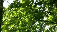Sunlight on leafy trees Stock Footage