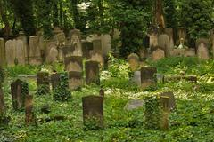 Stock Photo of idyllic old graveyard in berlin