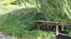 Lonely wood bench willow tree branch move wind lake. Stock Footage